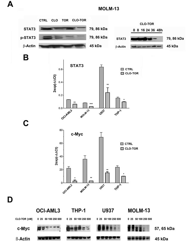 CLO-TOR modulates STAT3 and c-Myc expression in AML cell lines.