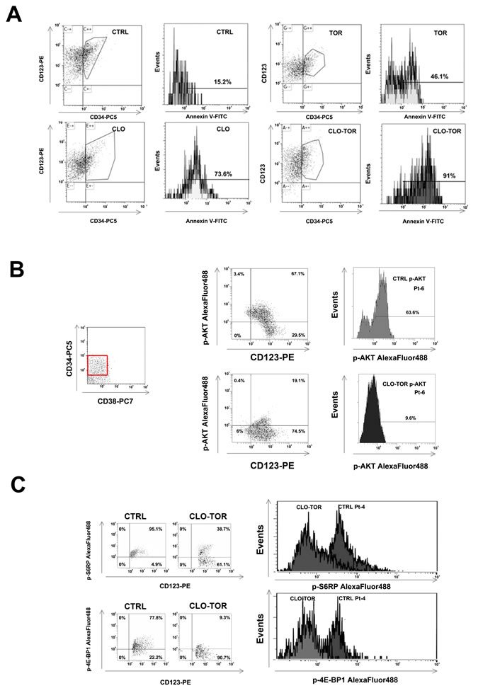 CLO-TOR induces apoptosis and modulates PI3K/Akt/mTOR signaling in the CD34