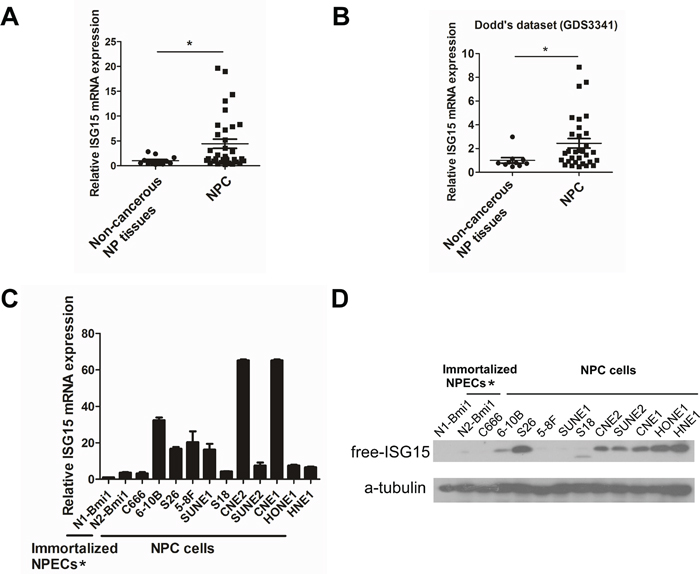 Up-regulation of ISG15 expression in NPC sample and cell lines.