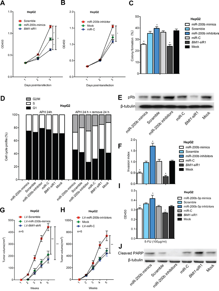 MiR-200b represses the growth and invasion of HCC cells and sensitizes HCC cells to apoptosis.