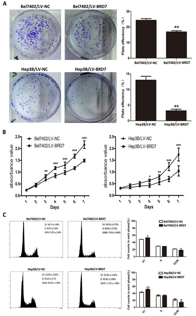 BRD7 overexpression inhibits HCC cell viability.