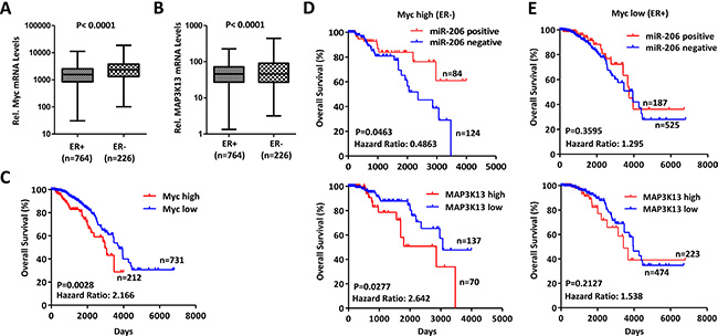 MAP3K13 is required for tumor growth of Myc-over-expressing human breast cancers.