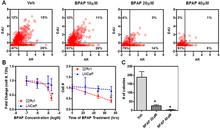 BPAP causes reduction in cell proliferation and cell number in 22Rv1 cells.