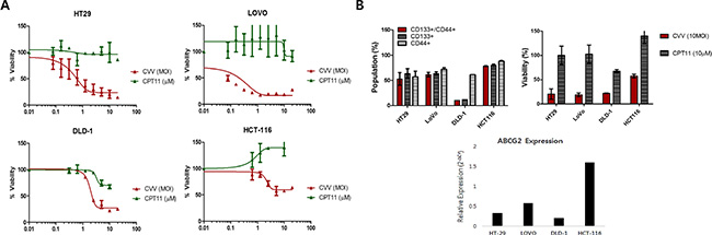 Cytotoxicity of CVV towards CPT11-resistant cells may overcome the stem cell-like cancer cell population.