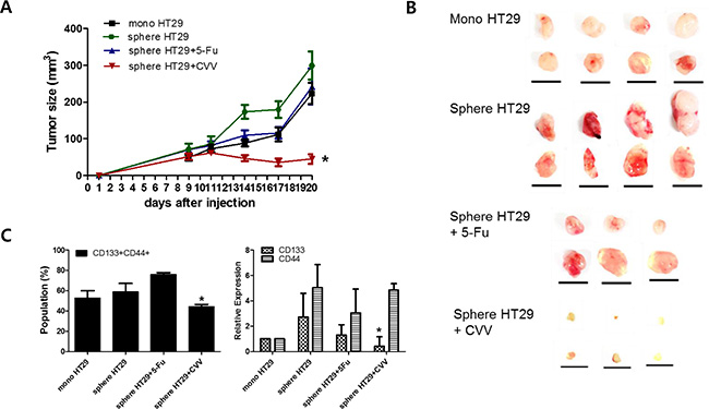 Enhanced suppression of stem cell-like HT29 human colon cancer cells by CVV.