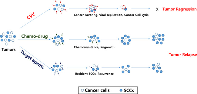 Schematic illustration of how CVV can kill colon cancer cells by overcoming SCC issues.