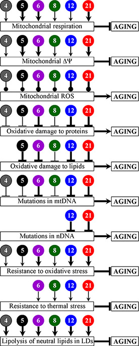 Figure 13. PE4, PE5, PE6, PE8, PE12 and PE21 delay yeast chronological aging and have different effects on several longevity-defining cellular processes.