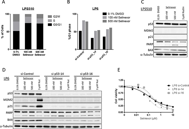 Selinexor acts independently of p53 in LPS (LPS510 and p53 knocked-down LP6).