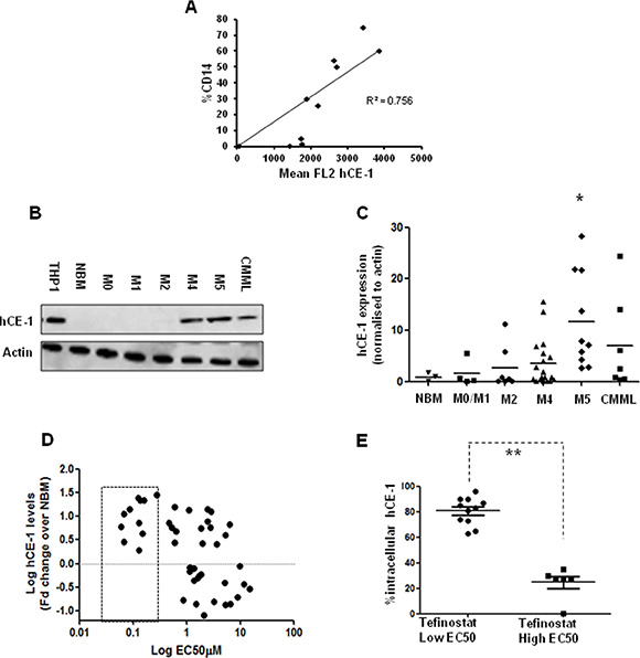 hCE-1 expression levels dictate efficacy of Tefinostat in monocytic leukaemias.