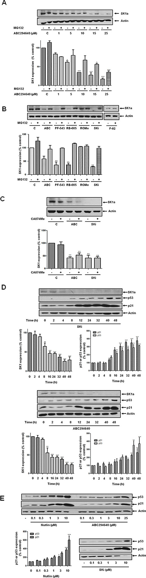 Effect of various SK inhibitors on the proteasomal degradation of SK1a in androgen-independent LNCaP-AI cells.
