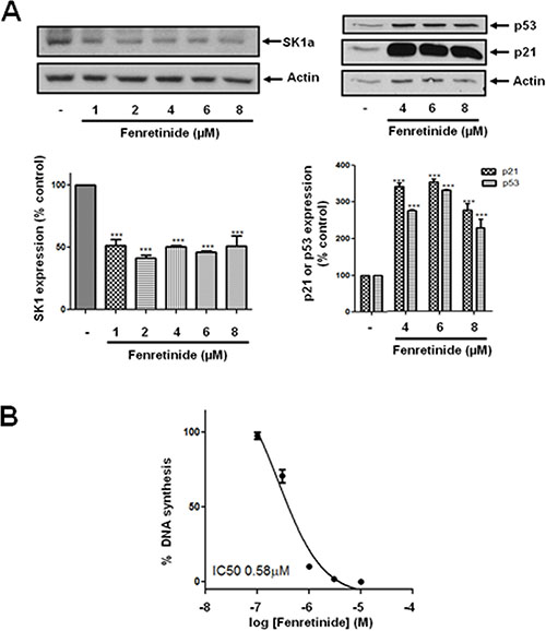 Effect of fenretinide on SK1a, p21 and p53 expression.