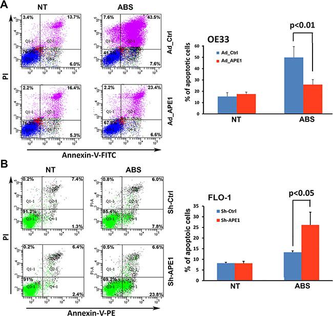 APE1 attenuates apoptosis in response to acidic bile salts in EAC cells.
