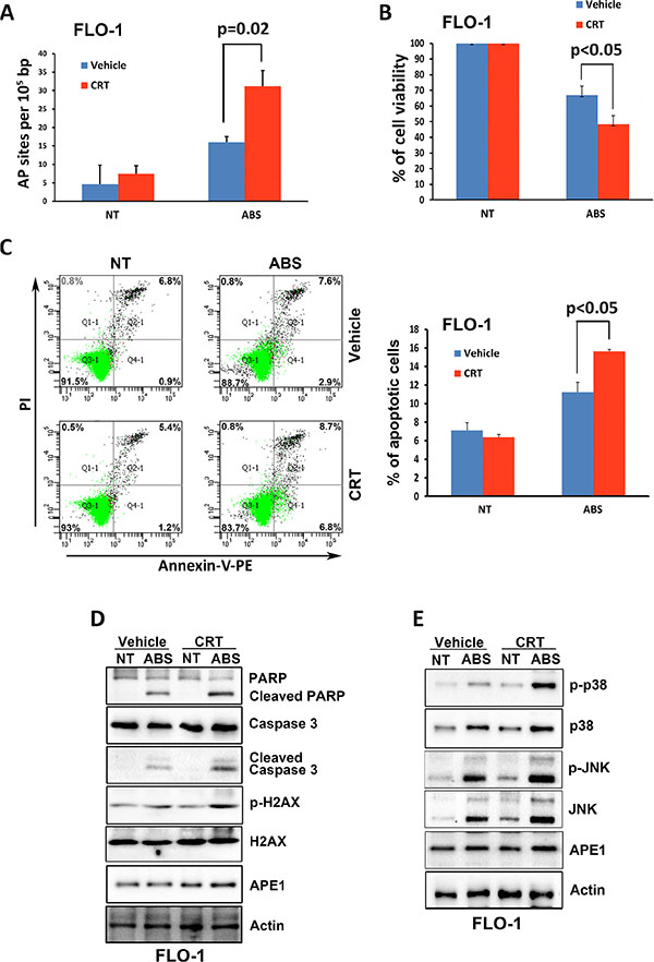 Inhibition of APE1 DNA repair activity enhances DNA damage, apoptosis and activation of JNK and p38 pathways in response to acidic bile salts.