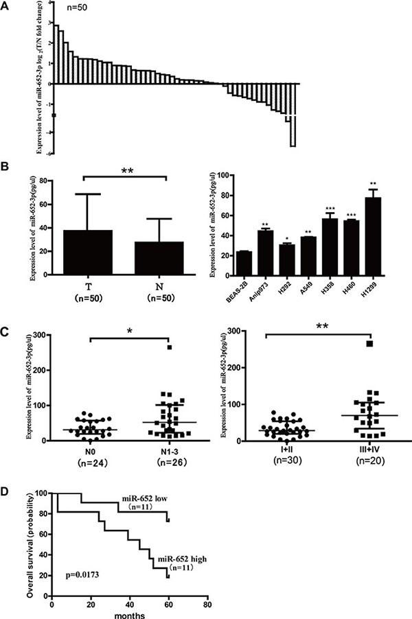 The expression of miR-652-3p is upregulated in NSCLC tissues and cell lines, and correlated with disease progression of patients with NSCLC.