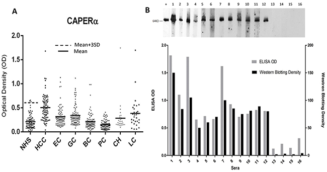 Titers of autoantibodies to CAPERα in human sera determined by ELISA and comparison of Western blotting and ELISA assays for anti-CAPERα