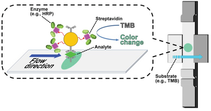 Scheme of enzyme-enhanced LFIC for VCP detection.