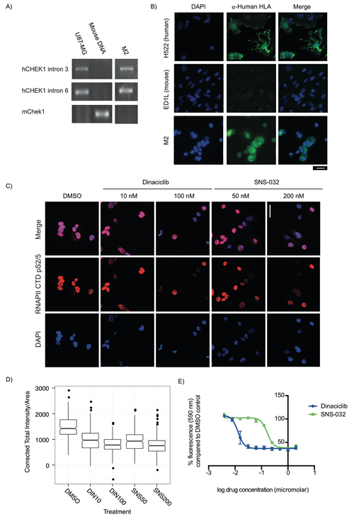 Explant cells generated from PDX models for rapid testing of targeted therapeutics are sensitive to CDK9 inhibitors.