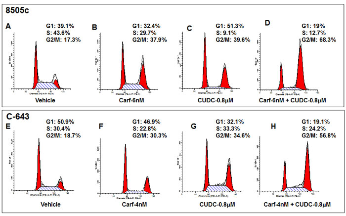 Carfilzomib potentiates the effects of CUDC-101 on cell cycle arrest in 8505c (A to D) and C-643 (E to H) cells.