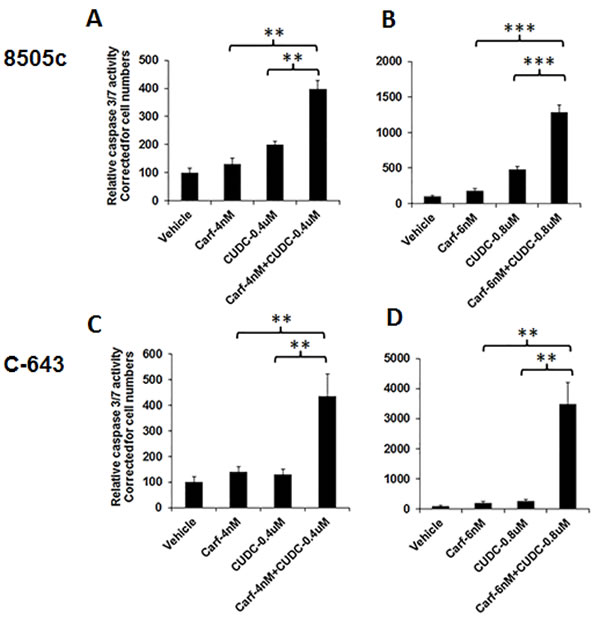 The combination of carfilzomib and CUDC-101 increased caspase-dependent apoptosis.