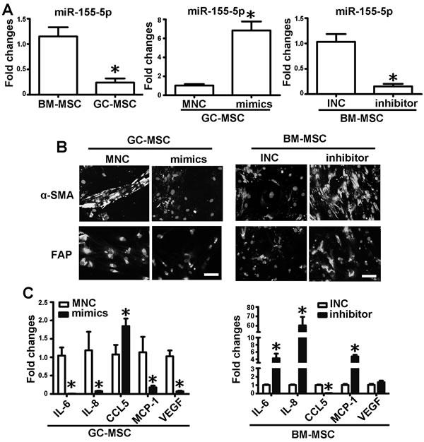 miR-155-5p underexpression confers BM-MSC with GC-MSC-like phenotype.