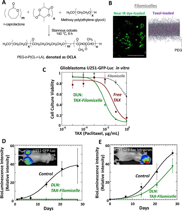 Drug-loaded nanocarriers consisting of polymeric filomicelles that incorporate paclitaxel (Taxol) prove effective against GBM in cell culture and in flank tumors but appear ineffective against intracranial tumors.