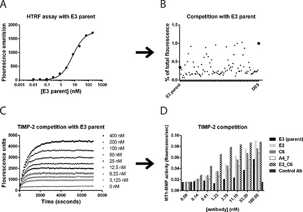 Affinity maturation of lead antibody clones and screening for improved variants.