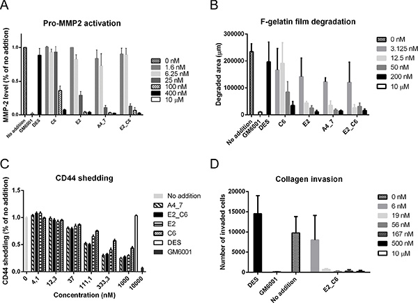Affinity-improved Fc-scFv's effectively inhibit cell-surface MT1-MMP activity.