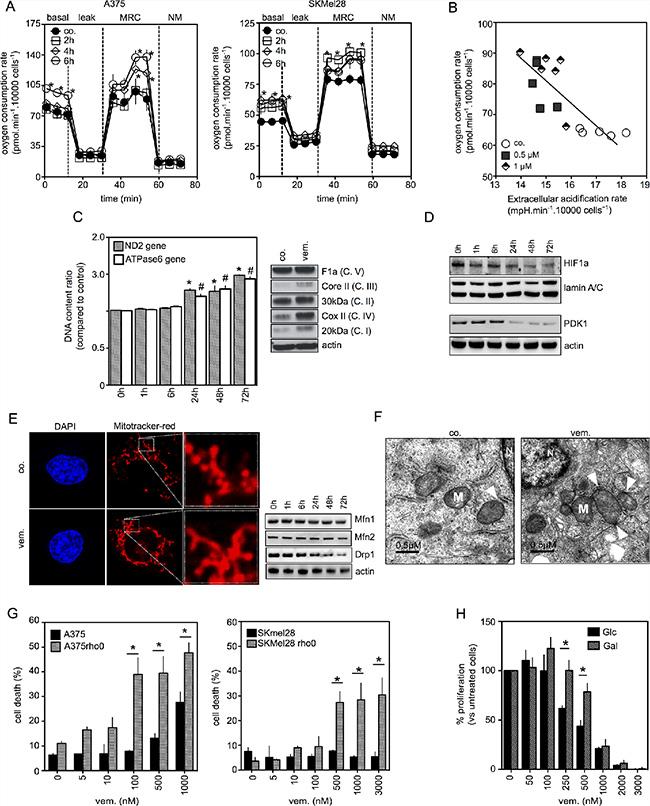 Coordinated changes in mitochondria of melanoma cells exposed to vemurafenib.