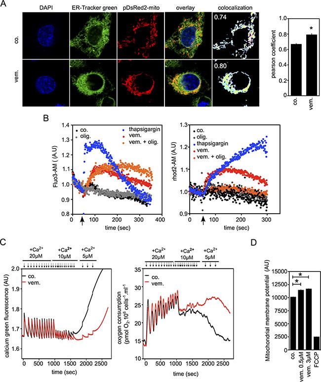 Vemurafenib increases Mitochondria/ER contacts and mitochondrial Ca2+ uptake.