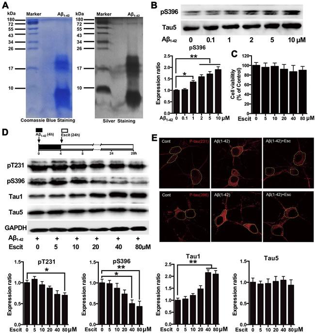 Escitalopram attenuates Aβ
