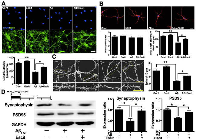 Escitalopram improves Aβ
