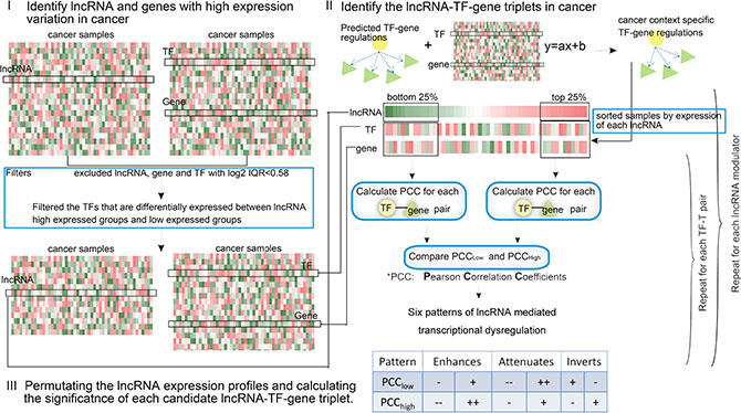 Schematic overview of the identification of lncRNA modulators in cancer.