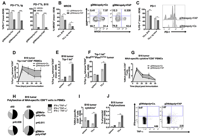 Depleting FAP+ stromal cells with AdC68-mFAP vaccine reduces metabolic stress and improves effector functions of AdC68-gDMelapoly-induced CD8+T cells.