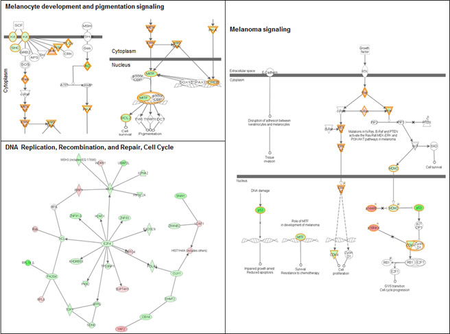 Signaling networks affected by the R87P-p16 mutation.