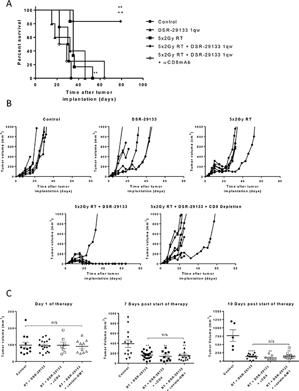 Therapeutic efficacy of fractionated RT and DSR-29133 combination is dependent on the activity of CD8+ T-lymphocytes.