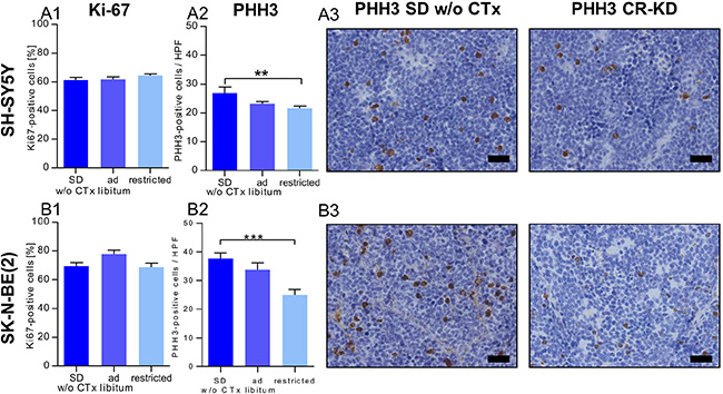 Reduced proliferation contributes to the growth inhibitory effect of CR but not MCP.