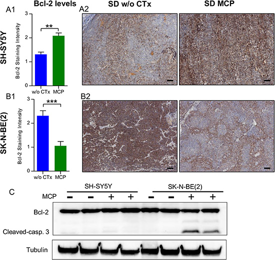 SH-SY5Y (A) and SK-N-BE(2) (B) cell lines show divergent regulation of Bcl-2 levels under MCP.