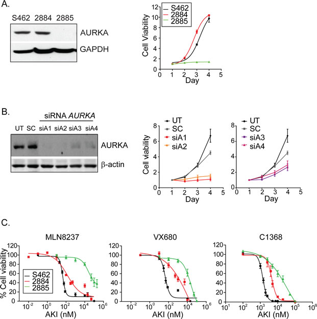 Inhibition of AURKA attenuates the growth of MPNST cell-lines in vitro.