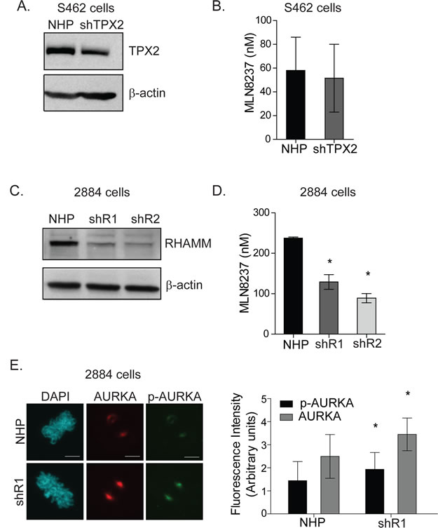 RHAMM depletion increases AURKA activity and sensitivity to AKI in 2884 cells.