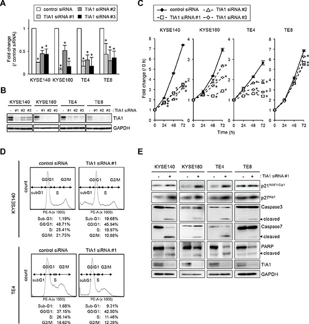 Effects of TIA1 knockdown on cell proliferation.