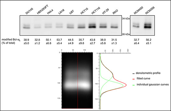 Quantification of monodeamidated Asp52Bcl-xL in normal and cancer cell lines.