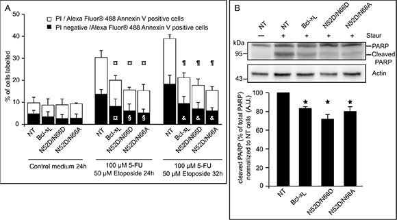 Singly and doubly deamidated forms of Bcl-xL retain full anti-apoptotic activity.