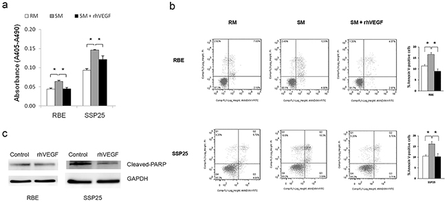 VEGF signaling inhibited apoptosis in RBE, and SSP25 cells.