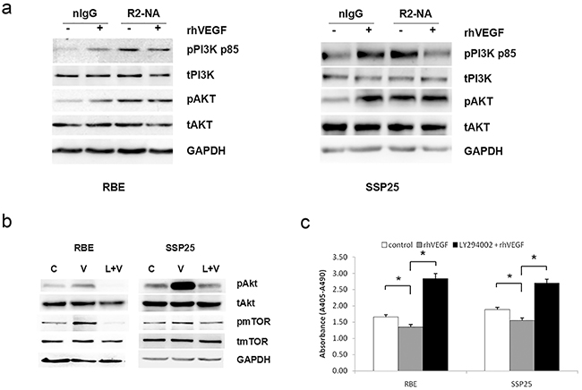 VEGF signaling through a phosphoinositide-3-kinase (PI3K)/protein kinase B(Akt)-dependent pathway in ICC cells.