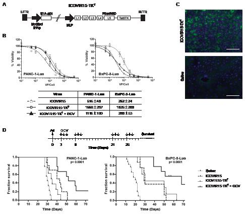 Antitumoral effects of ICOVIR15-TK