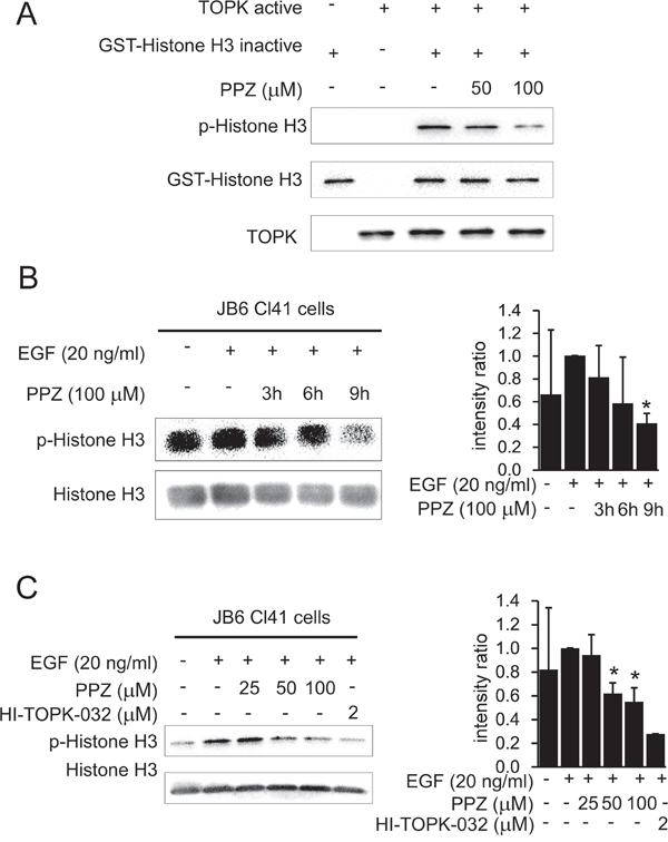 Pantoprazole suppresses TOPK activity in vitro and in JB6 Cl41 cells.
