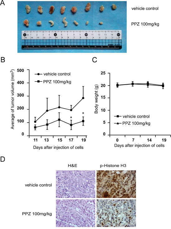 Pantoprazole suppresses tumor growth by inhibiting TOPK activity in vivo.