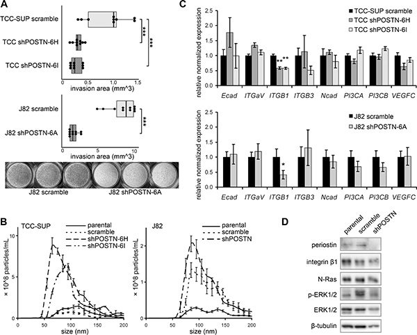 Behavioral and signaling pathway effects of periostin suppression.