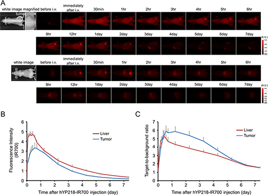 In vivo fluorescence imaging of A431/H9 tumor.