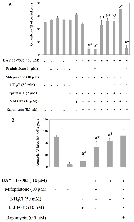 Mifepristone and inhibitors of autophagy protect synovial fibroblasts from BAY 11-7085-induced apoptosis.